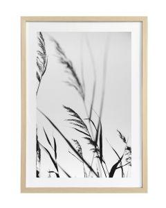 Taulu Grass 2 50x70cm DECO